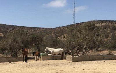 Pullalli: aportando al acceso al agua de los animales de la zona